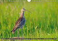 Unsere Wiesenvögel - Bezaubernde Schönheiten (Wandkalender 2019 DIN A4 quer) - Produktdetailbild 4