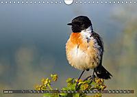 Unsere Wiesenvögel - Bezaubernde Schönheiten (Wandkalender 2019 DIN A4 quer) - Produktdetailbild 6
