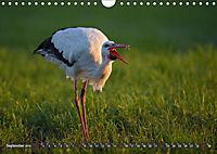 Unsere Wiesenvögel - Bezaubernde Schönheiten (Wandkalender 2019 DIN A4 quer) - Produktdetailbild 9