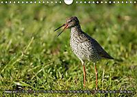 Unsere Wiesenvögel - Bezaubernde Schönheiten (Wandkalender 2019 DIN A4 quer) - Produktdetailbild 10