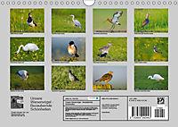 Unsere Wiesenvögel - Bezaubernde Schönheiten (Wandkalender 2019 DIN A4 quer) - Produktdetailbild 13