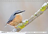 Unsere wilden Tiere im Winter (Tischkalender 2019 DIN A5 quer) - Produktdetailbild 12