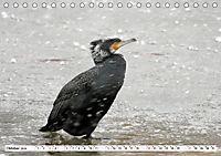 Unsere wilden Tiere im Winter (Tischkalender 2019 DIN A5 quer) - Produktdetailbild 10