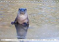 Unsere wilden Tiere im Winter (Tischkalender 2019 DIN A5 quer) - Produktdetailbild 6