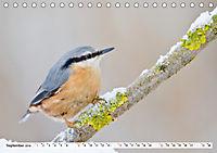 Unsere wilden Tiere im Winter (Tischkalender 2019 DIN A5 quer) - Produktdetailbild 9