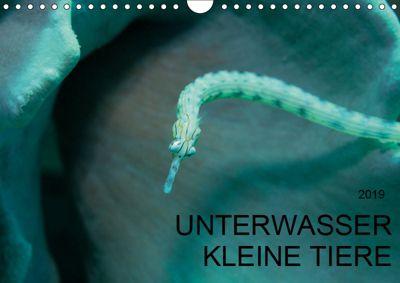 UNTERWASSER KLEINE TIERE (Wandkalender 2019 DIN A4 quer), Karsten Schulze
