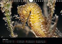 UNTERWASSER KLEINE TIERE (Wandkalender 2019 DIN A4 quer) - Produktdetailbild 6