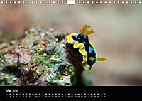 UNTERWASSER KLEINE TIERE (Wandkalender 2019 DIN A4 quer) - Produktdetailbild 5