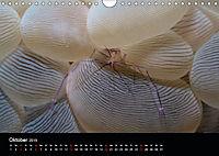 UNTERWASSER KLEINE TIERE (Wandkalender 2019 DIN A4 quer) - Produktdetailbild 10