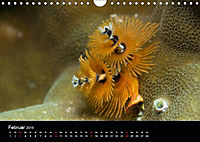 UNTERWASSER KLEINE TIERE (Wandkalender 2019 DIN A4 quer) - Produktdetailbild 2