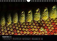 UNTERWASSER KLEINE TIERE (Wandkalender 2019 DIN A4 quer) - Produktdetailbild 9