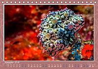 Unterwasser Kunstwerke (Tischkalender 2019 DIN A5 quer) - Produktdetailbild 12