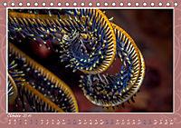 Unterwasser Kunstwerke (Tischkalender 2019 DIN A5 quer) - Produktdetailbild 10