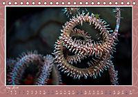 Unterwasser Kunstwerke (Tischkalender 2019 DIN A5 quer) - Produktdetailbild 5