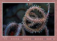 Unterwasser Kunstwerke (Wandkalender 2019 DIN A2 quer) - Produktdetailbild 5