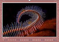 Unterwasser Kunstwerke (Wandkalender 2019 DIN A2 quer) - Produktdetailbild 3