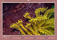 Unterwasser Kunstwerke (Wandkalender 2019 DIN A2 quer) - Produktdetailbild 1