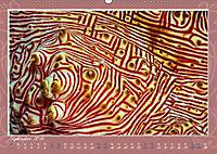 Unterwasser Kunstwerke (Wandkalender 2019 DIN A2 quer) - Produktdetailbild 9
