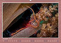 Unterwasser Kunstwerke (Wandkalender 2019 DIN A2 quer) - Produktdetailbild 11