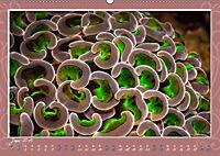 Unterwasser Kunstwerke (Wandkalender 2019 DIN A2 quer) - Produktdetailbild 6