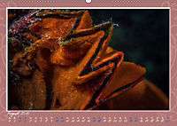 Unterwasser Kunstwerke (Wandkalender 2019 DIN A2 quer) - Produktdetailbild 8