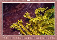 Unterwasser Kunstwerke (Wandkalender 2019 DIN A3 quer) - Produktdetailbild 1