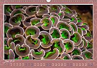 Unterwasser Kunstwerke (Wandkalender 2019 DIN A3 quer) - Produktdetailbild 6