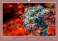 Unterwasser Kunstwerke (Wandkalender 2019 DIN A3 quer) - Produktdetailbild 12
