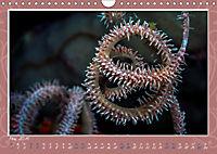 Unterwasser Kunstwerke (Wandkalender 2019 DIN A4 quer) - Produktdetailbild 5