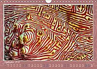 Unterwasser Kunstwerke (Wandkalender 2019 DIN A4 quer) - Produktdetailbild 9
