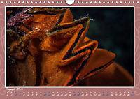 Unterwasser Kunstwerke (Wandkalender 2019 DIN A4 quer) - Produktdetailbild 8