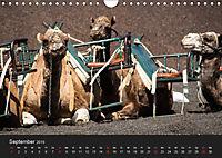 Unterwegs auf Lanzarote (Wandkalender 2019 DIN A4 quer) - Produktdetailbild 9