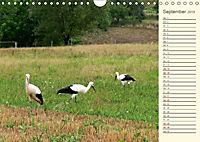 Unterwegs zwischen Rochlitz und Colditz (Wandkalender 2019 DIN A4 quer) - Produktdetailbild 9