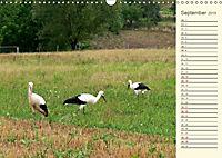 Unterwegs zwischen Rochlitz und Colditz (Wandkalender 2019 DIN A3 quer) - Produktdetailbild 9