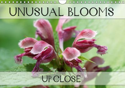 Unusual Blooms Up Close (Wall Calendar 2019 DIN A4 Landscape), Gisela Kruse