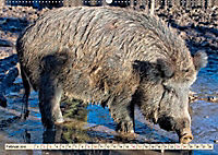 Unverwechselbar - Wildschwein (Wandkalender 2019 DIN A2 quer) - Produktdetailbild 2