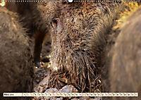 Unverwechselbar - Wildschwein (Wandkalender 2019 DIN A2 quer) - Produktdetailbild 3