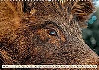 Unverwechselbar - Wildschwein (Wandkalender 2019 DIN A2 quer) - Produktdetailbild 7