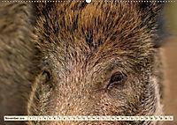 Unverwechselbar - Wildschwein (Wandkalender 2019 DIN A2 quer) - Produktdetailbild 11