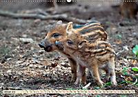 Unverwechselbar - Wildschwein (Wandkalender 2019 DIN A2 quer) - Produktdetailbild 1