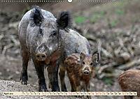 Unverwechselbar - Wildschwein (Wandkalender 2019 DIN A2 quer) - Produktdetailbild 4
