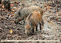 Unverwechselbar - Wildschwein (Wandkalender 2019 DIN A2 quer) - Produktdetailbild 10