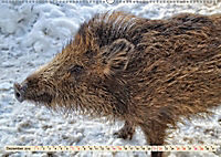 Unverwechselbar - Wildschwein (Wandkalender 2019 DIN A2 quer) - Produktdetailbild 12