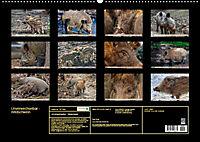 Unverwechselbar - Wildschwein (Wandkalender 2019 DIN A2 quer) - Produktdetailbild 13