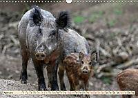Unverwechselbar - Wildschwein (Wandkalender 2019 DIN A3 quer) - Produktdetailbild 4