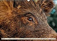 Unverwechselbar - Wildschwein (Wandkalender 2019 DIN A3 quer) - Produktdetailbild 7