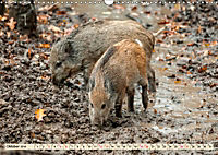 Unverwechselbar - Wildschwein (Wandkalender 2019 DIN A3 quer) - Produktdetailbild 10