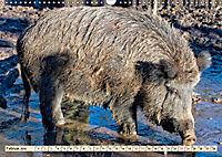 Unverwechselbar - Wildschwein (Wandkalender 2019 DIN A3 quer) - Produktdetailbild 2