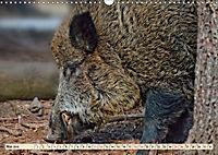 Unverwechselbar - Wildschwein (Wandkalender 2019 DIN A3 quer) - Produktdetailbild 5