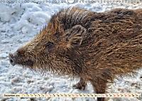 Unverwechselbar - Wildschwein (Wandkalender 2019 DIN A3 quer) - Produktdetailbild 12